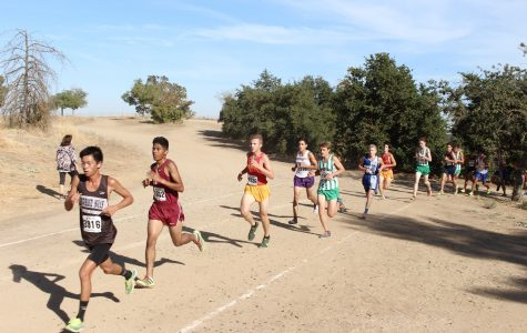 Cross Country looks ahead to state finals