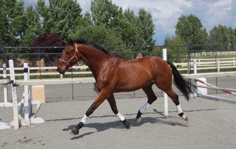 Saucy Stallion