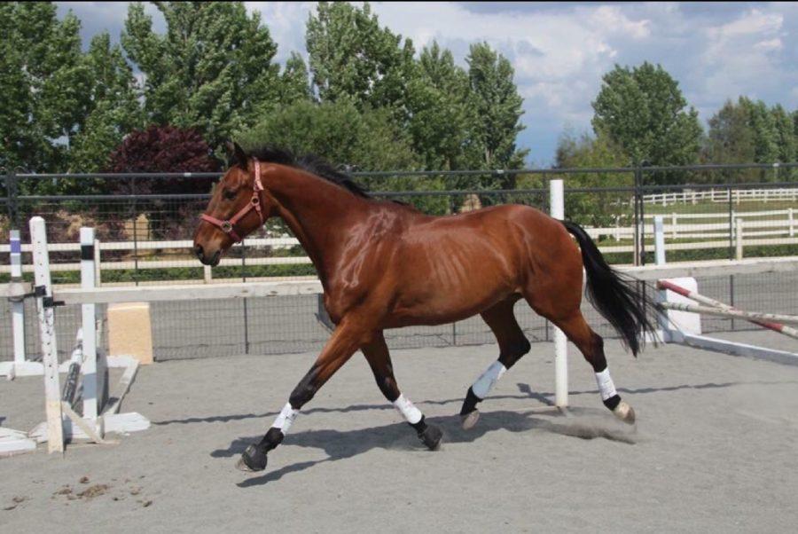 Saucy+Stallion
